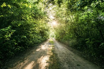 wood forest road. forest path with green trees vegetation and sun shine