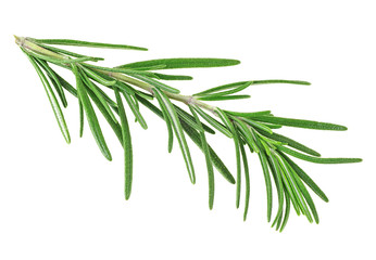 Fresh rosemary isolated on a white background, closeup.