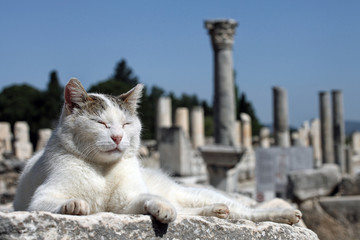 an old cat is lying down on ancient city residuals