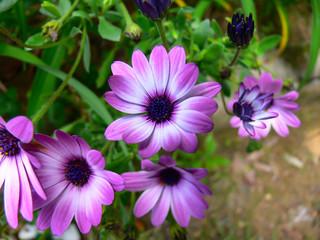 Flores num canteiro