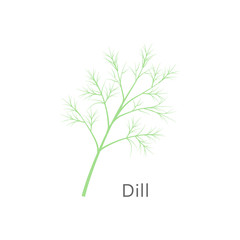 Bunch of fresh dill isolated on white background. Vector illustration.