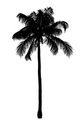 Black palm tree silhouette isolated white background