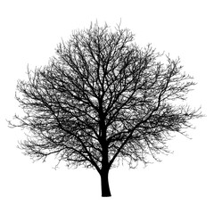 Tree silhouette isolated white background