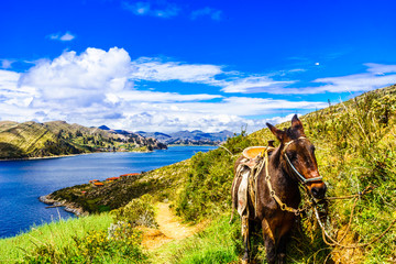 View on donkey on Isla del Sol by Lake Titicaca - Bolivia