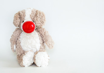 Red Nose Day-cuddly stuffed brown bear wearing a red nose isolated on a solid background