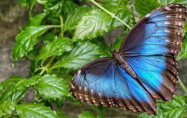 The Sertoma Butterfly House and Marine Cove in Sioux Falls, South Dakota is a Year-Round Tropical oasis with indoor garden