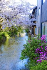 桜と京都の街並みの風景