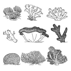 Corals hand drawn vector illustrations
