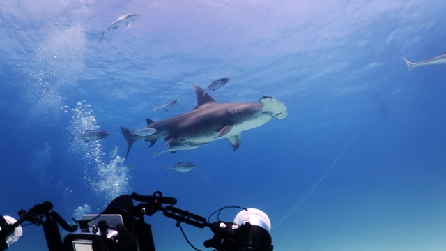 Portrait of a diver while he is filming a hammerhead shark. Concept: Nature, holidays, passion