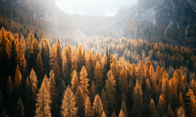 Great view of the yellow larches. National Park Tre Cime di Lavaredo, Dolomiti alp, Tyrol, Italy.