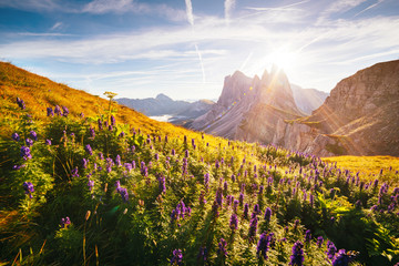 Calm view of the alpine hill. Location Puez-Odle National Park, Dolomite, Italy.