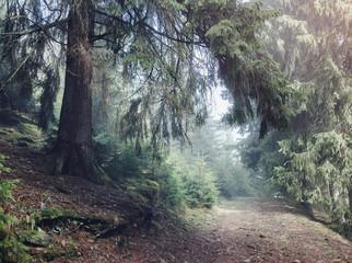Misty forest on mountain slopes in sunshine. Location: Carpathian, Ukraine, Europe.