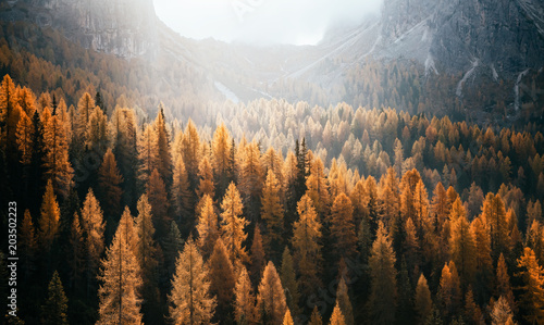 Wall mural Great view of the yellow larches. National Park Tre Cime di Lavaredo, Dolomiti alp, Tyrol, Italy.