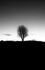 Lone Silhouette of Tree in B&W at Dawn