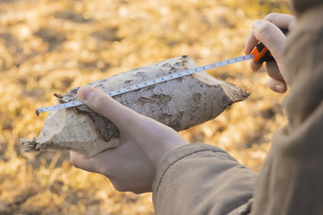 A piece of a wood with the traces teeth of a beaver is in a zoologist's hands. The scientist is holding a aspen log and a measuring tape and investigating the remains of food of mammals.