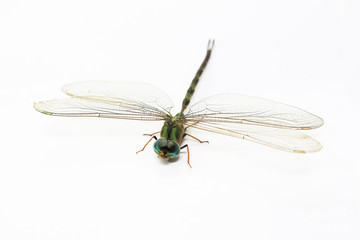 Green dragonfly isolated in white background. Transparent wings insect.