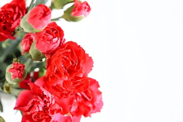 Bunch of Beautiful Red Carnation Flowers on White Background