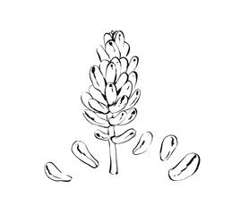 Hand drawn vector abstract artistic ink textured graphic sketch drawing illustration of succulent cactus plant flower isolated on white background