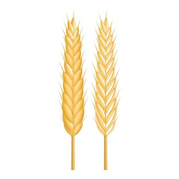 Strong wheat icon. Realistic illustration of strong wheat vector icon for web design isolated on white background