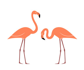 Flamingo set. Isolated flamingo on white background