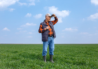 Senior farmer standing in young wheat field holding phone in his hand and examining crop.