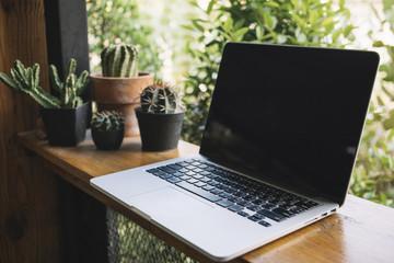 Laptop near cacti