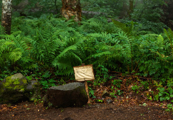 Photo of fern in forest