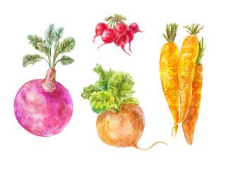 Set of underground vegetables.