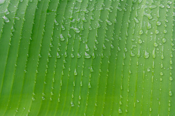 Green leaf macro, green fresh plants close up for background
