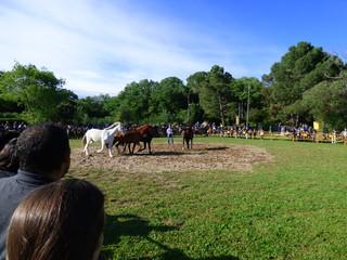 Feria del Caballo en Corsá, pueblo del Ampurdán, en Gerona (Cataluña,España)