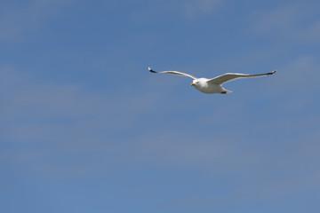 Seabird the Seagull against a blue sky.