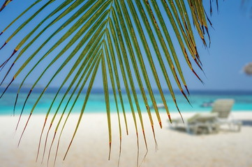 Palm leaf over beach and seascape view on Maldives