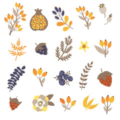 Vector set of cute hand drawing elements: branches, leaves, berries, flowers, pomegranate on the white background