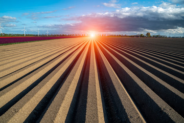 Wall Mural - Sunset over brown field with rows