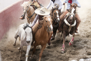 Mexican charros performing a dangerous horse stun
