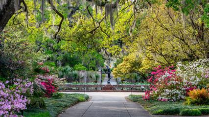 Aluminium Prints Azalea Azalea Garden in Spring - South Carolina with Live Oaks