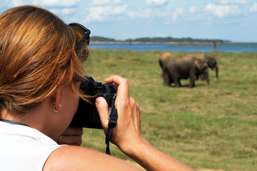 Caucasian woman making photo of elephant during safari in national park In Sri Lanka