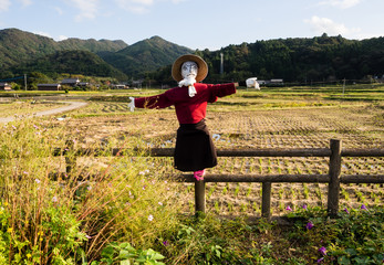 Scarecrow on rice fields in Japan