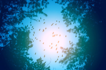 Photo flight of a flock of birds