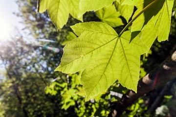 Bright fresh nature green leaf