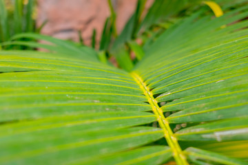 Bright Palm Leaves.