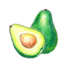 The illustration of avocado fruit