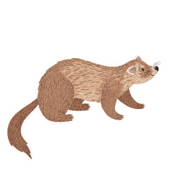 Vector illustration of ferret . Cute hand drawing animal is isolated on white. Smiling cartoon character.