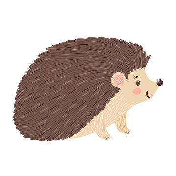 Vector illustration of smiling hedgehog. Isolated on white. Cute cartoon character.