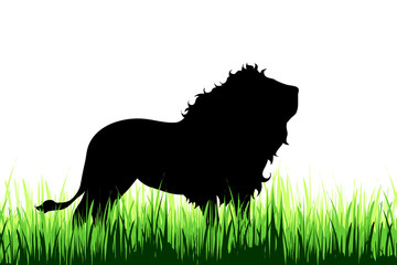 Vector silhouette of lion on a meadow on white background.