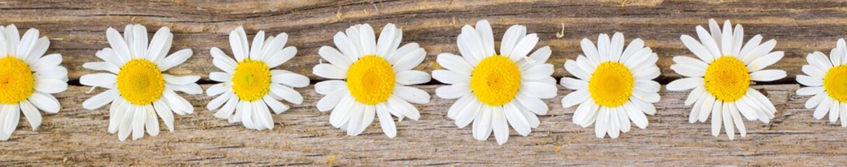 Photo sur Plexiglas Marguerites Banner of daisy chamomile flowers on wooden background. View with copy space