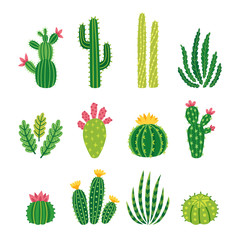 Fototapeta Vector set of bright cacti, aloe and leaves. Collection of exotic plants. Decorative natural elements are isolated on white. Cactus with flowers. obraz