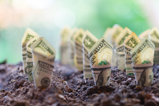 Dollar bill plant growth from ground.Concept of money tree growing from American dollars
