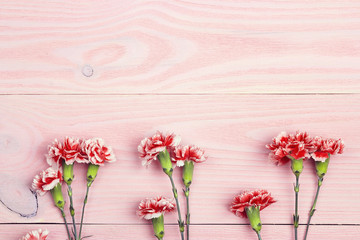 Carnations flowers on pink wooden background with copy space. Top view.