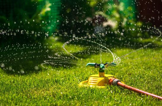 Garden watering of a spring green lawn. Sunny garden